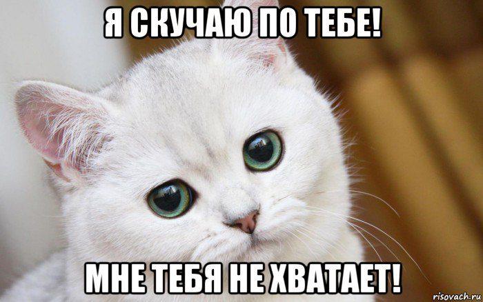 v-mire-grustit-odin-kotik_98118043_orig_