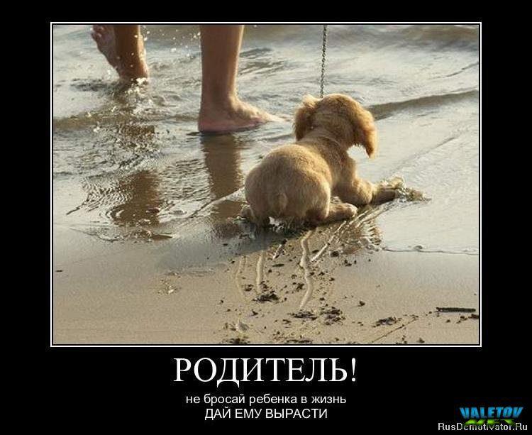 valetov_net_imgid_233495