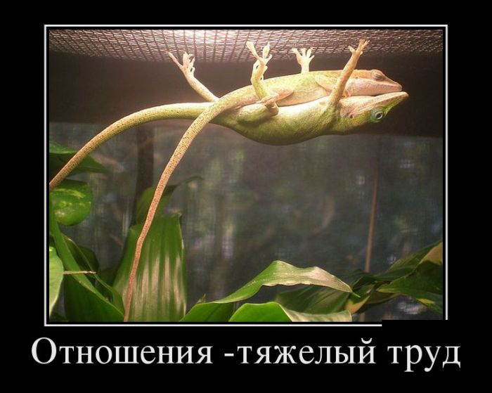 vesielie_demotivators_zapilili.ru_18