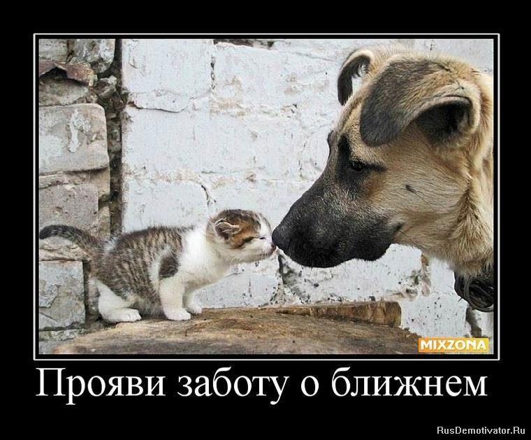1275056069_859585_proyavi-zabotu-o-blizhnem