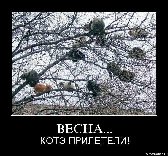 1333649001_demotivator-10