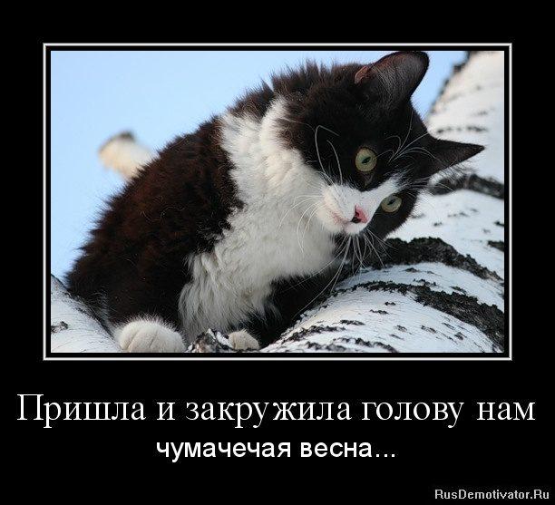 1359470791-prishla-i-zakruzhila-golovu-nam