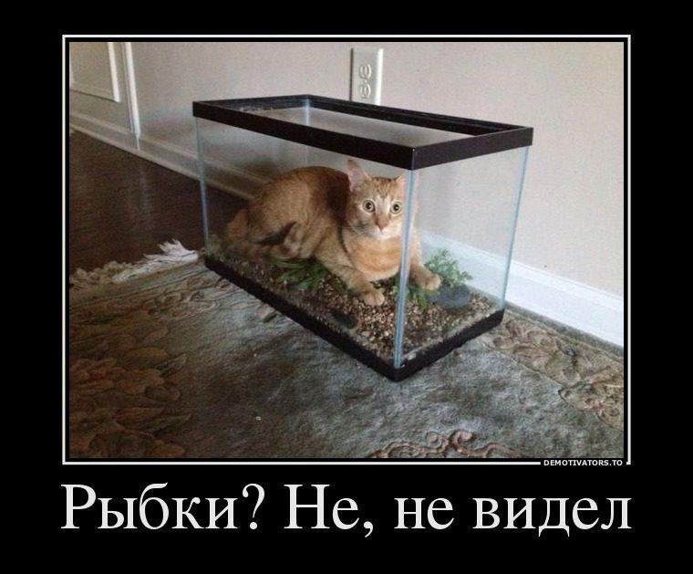 42_9662076_ryibki_ne_ne_videl