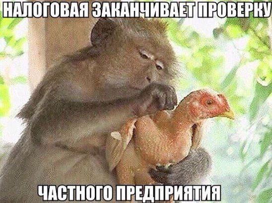 Смешные картинки с животными с надписью бесплатно