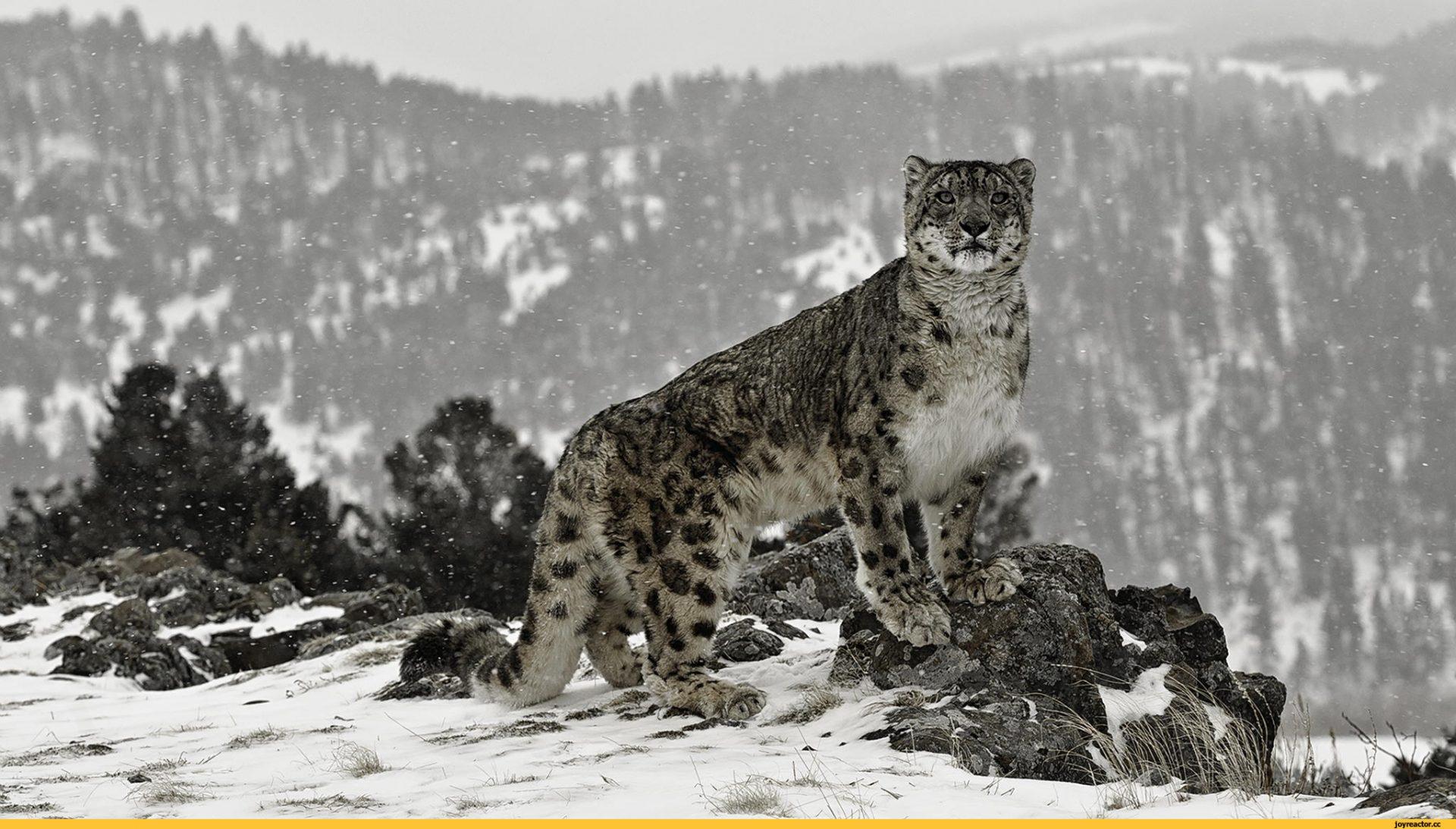 Природа-горы-зима-снег-2583885