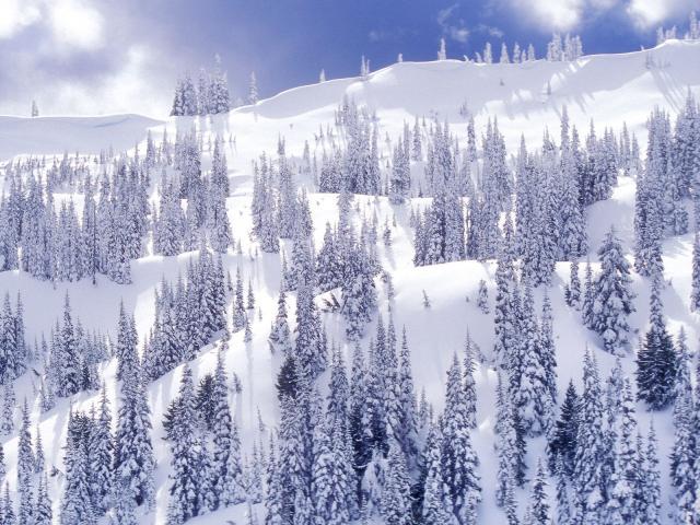 comforter_of_white_hurricane_ridge_olympic_national_park_washington