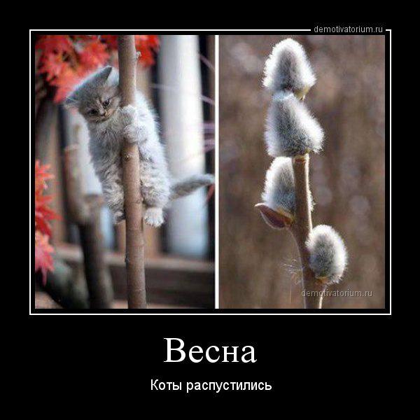 demotivatorium_ru_vesna_83086