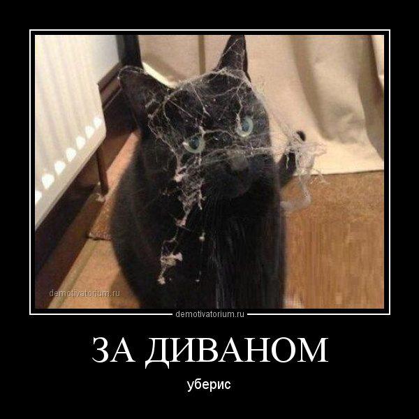demotivatorium_ru_za_divanom_36413