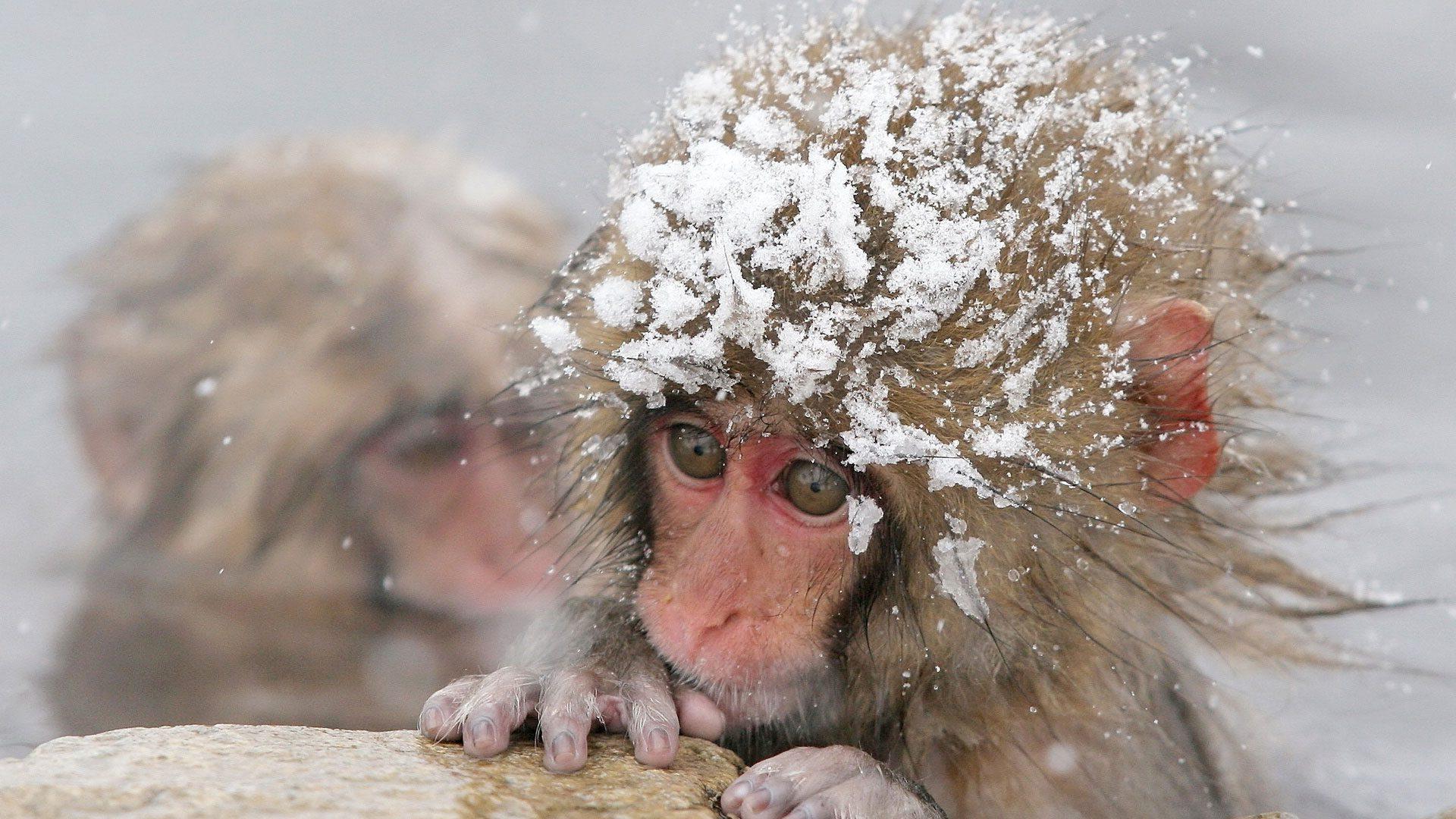 obezyanka-v-snegu