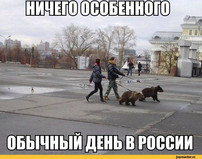 обычный-день-Россия-Медведи-живность-931678