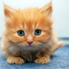 Cамые прикольные картинки про котят (39 фото)