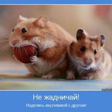 Прикольные картинки про дружбу со словами (35 фото)