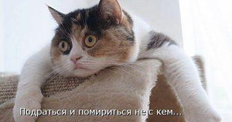 Прикольные картинки про животных в ВКонтакте (41 фото)