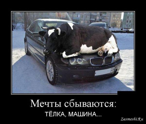 http://bipbap.ru/wp-content/uploads/2017/03/10756-Telka-i-mashina.jpg