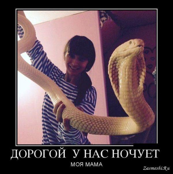 http://bipbap.ru/wp-content/uploads/2017/03/11724-Nastoyashchaya-kobra.jpg