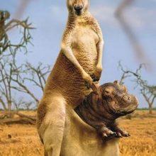 Прикольные картинки про животных на телефон (34 фото)