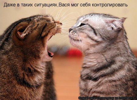 смешные фото котов с надписями прикольными