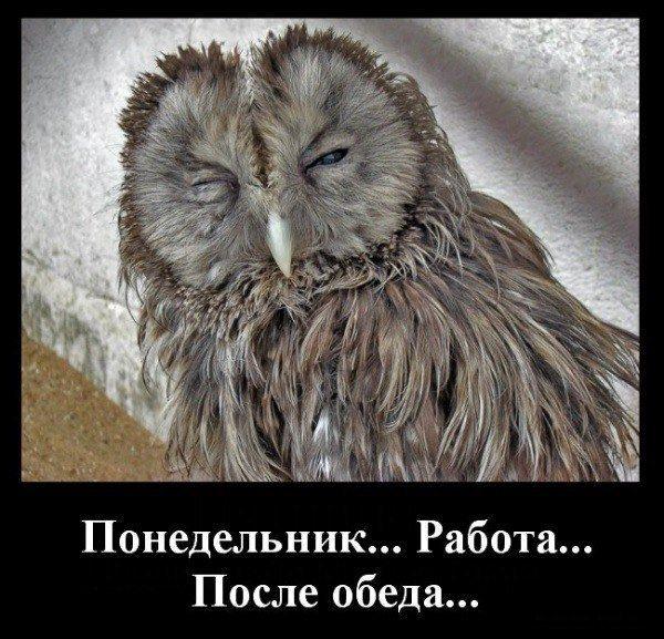 http://bipbap.ru/wp-content/uploads/2017/03/1354954656_demotivator18.jpg