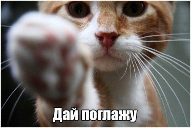 Foto Kotikov