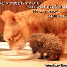 Прикольные картинки про котов с надписями прикольными (35 фото)