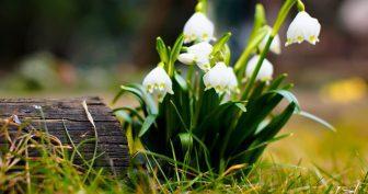 Прикольные картинки про весну на рабочий стол (36 фото)