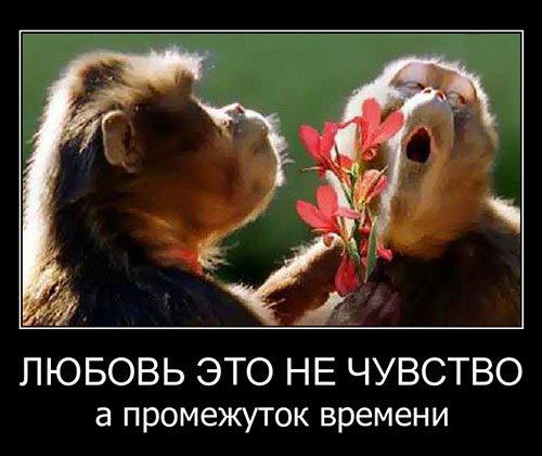Любимых не ищут их в награду дают небеса картинки