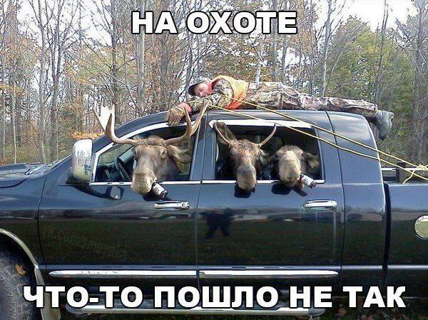 Картинки по запросу смешные картинки про охоту