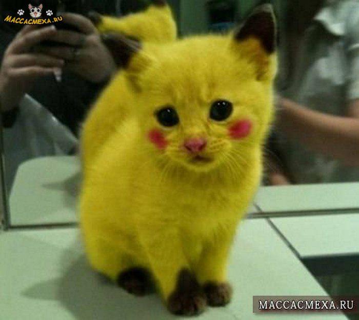 Прикольные картинки про коте