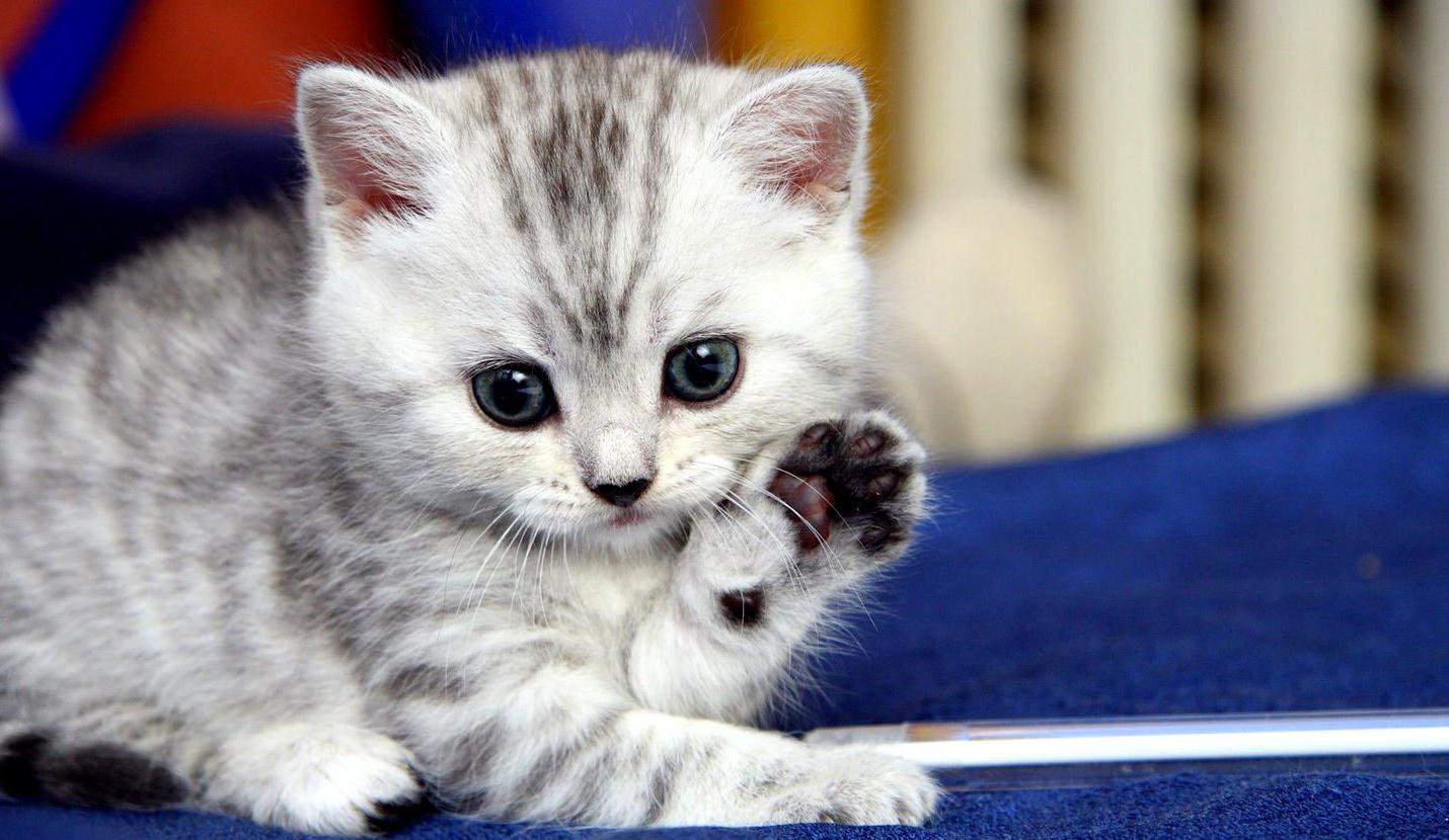 Фото картинки котята