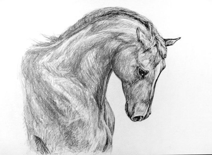 картинки лошадей карандашом для срисовки