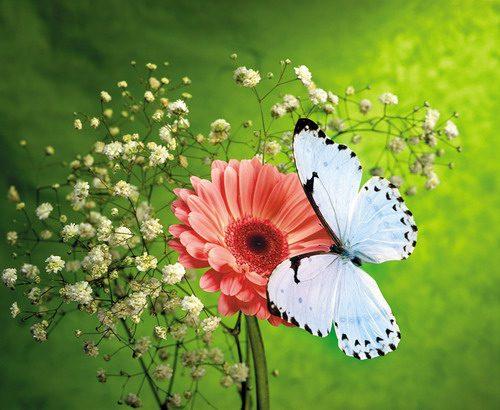 Какой день пересаживать цветы