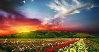 Самые красивые в мире картинки (51 фото)