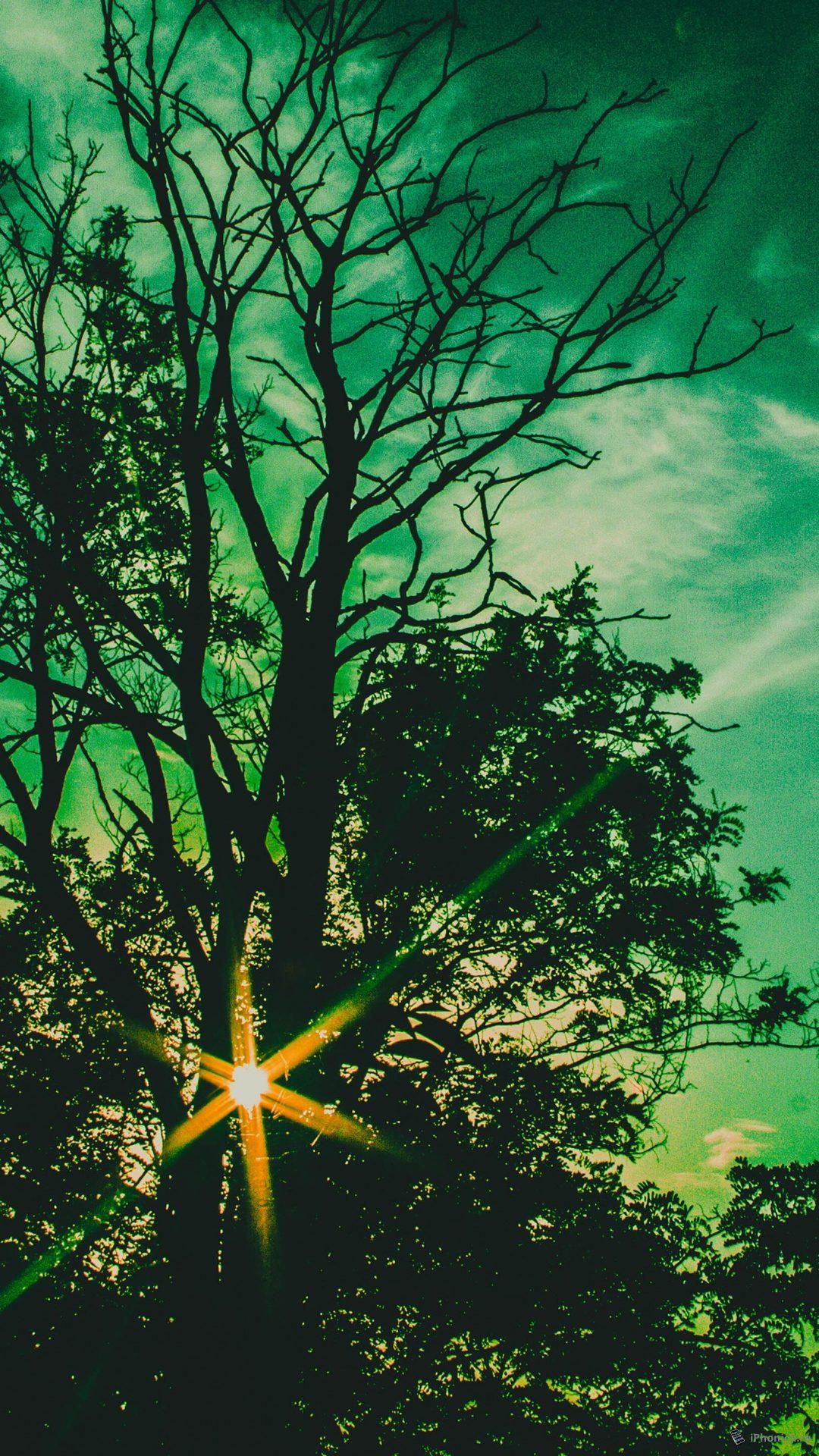 lumia 500 фото