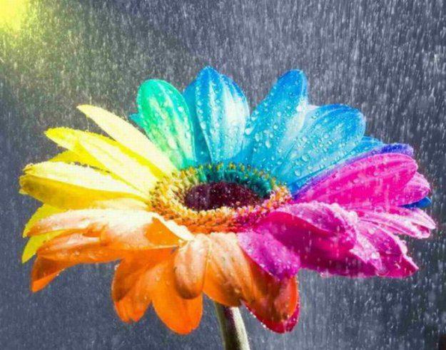 Картинки про цветы прикольные