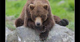 Прикольные картинки про медведя (38 фото)