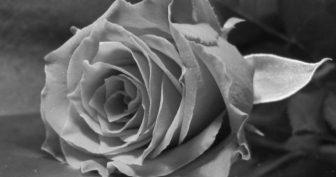 Красивые черно-белые картинки (44 фото)