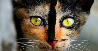 Красивые картинки кошек (37 фото)