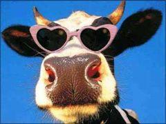 Прикольные картинки про коров (35 фото)