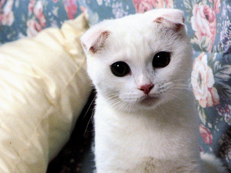 кошки картинки самые красивые