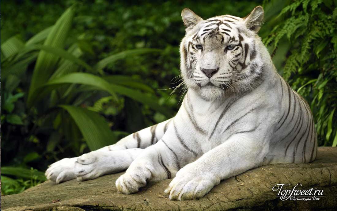 Смотреть картинки красивых животных