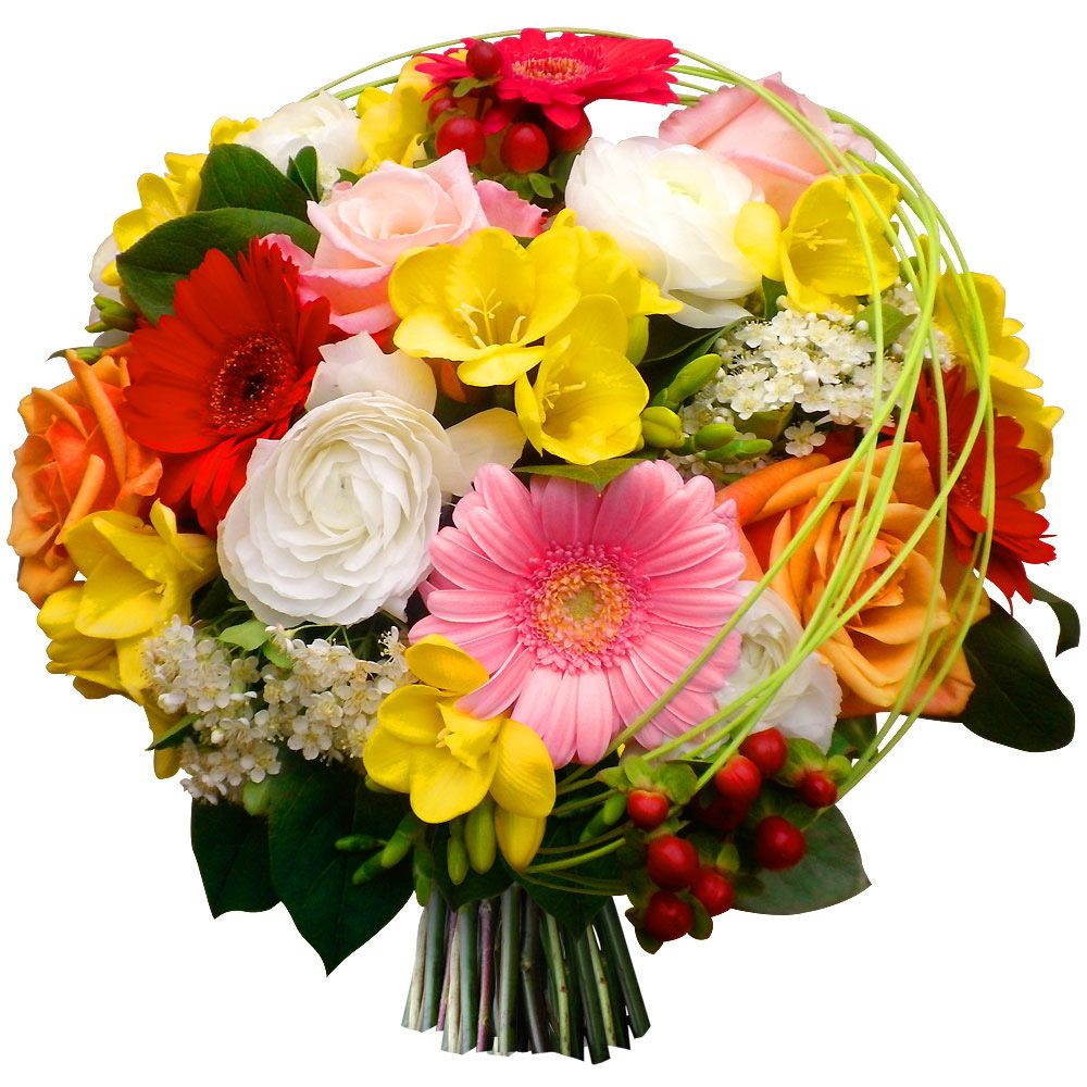 Красивые картинки цветов на белом фоне
