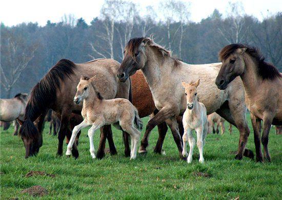 скачать игру про коней - фото 10