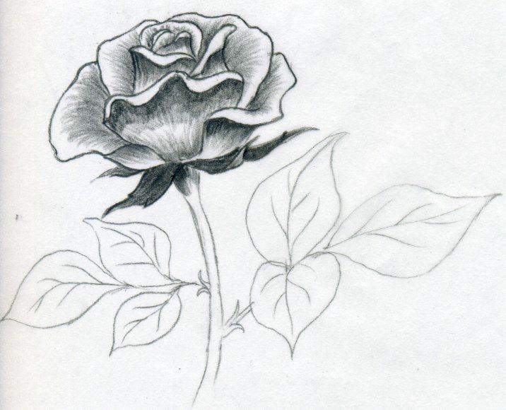 Как нарисовать каменный цветок из сказки бажова поэтапно карандашом