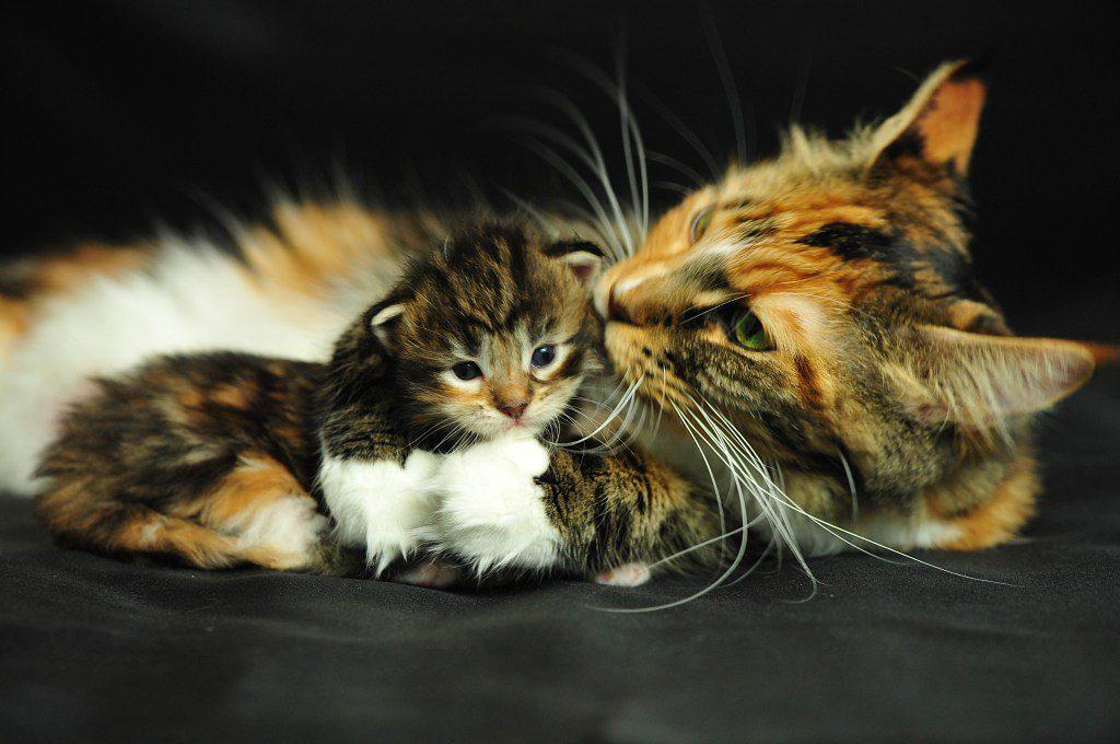 Бесплатное изображение Портрет милый домашний кот