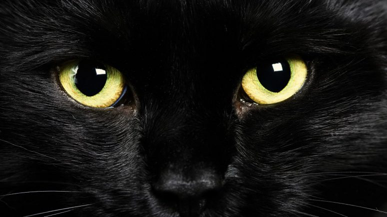 черный кот нарисованная картинка