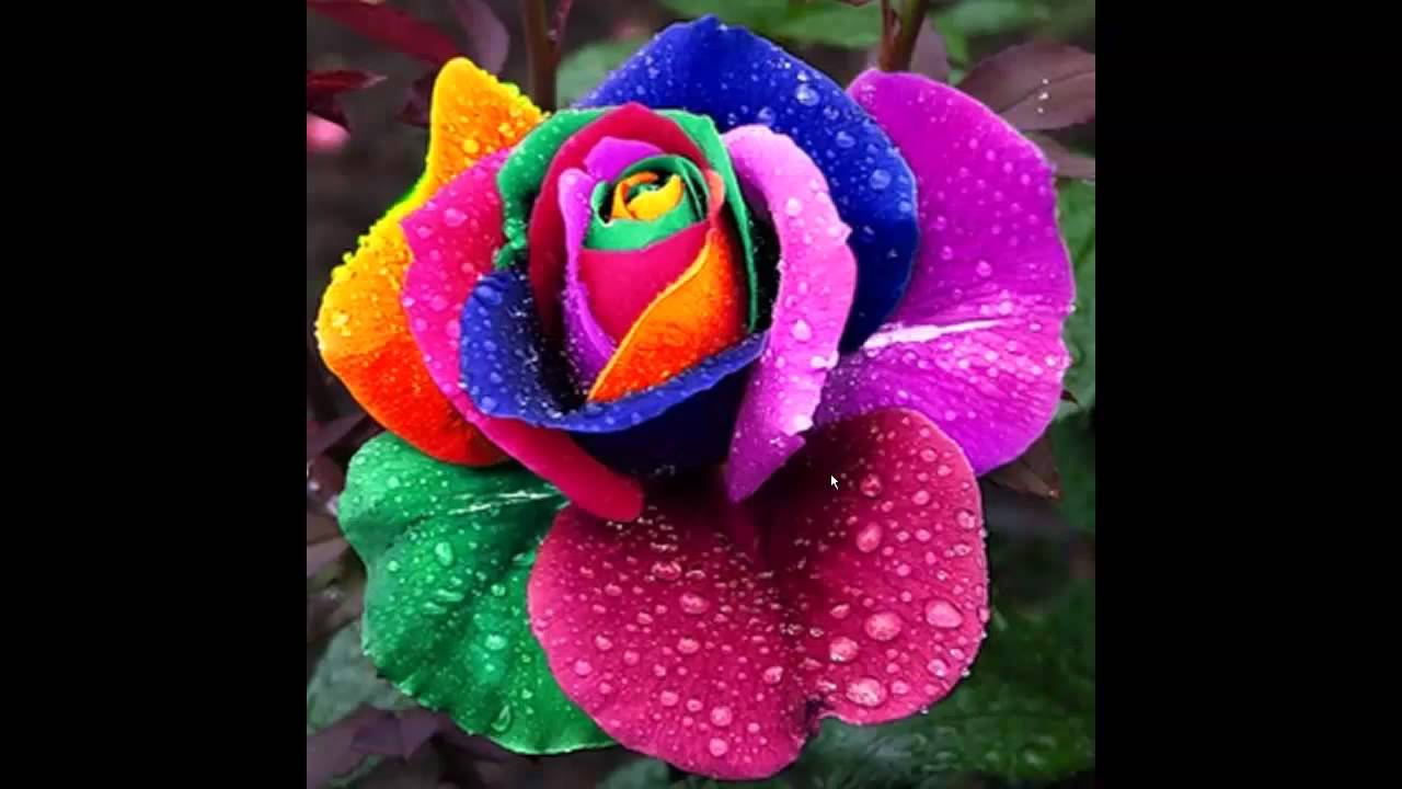Красивые букеты и композиции из живых цветов Фото