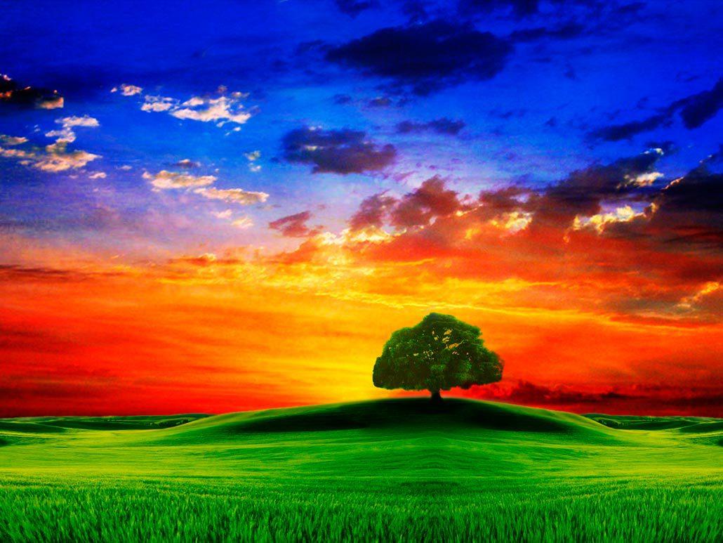 Поле небо лес