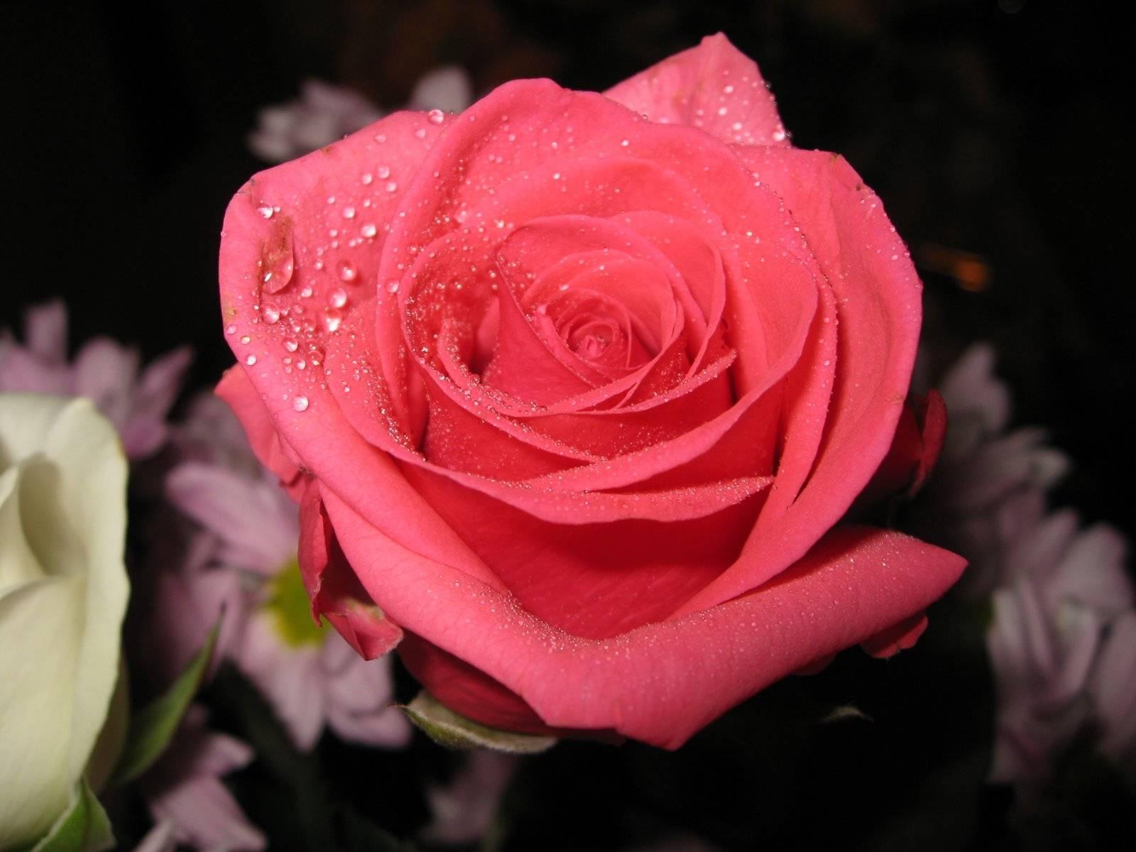 Красивые цветы букет роз фото