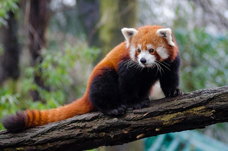 Красивые картинки животных (44 фото) • Прикольные картинки ... Жаба Зеленая