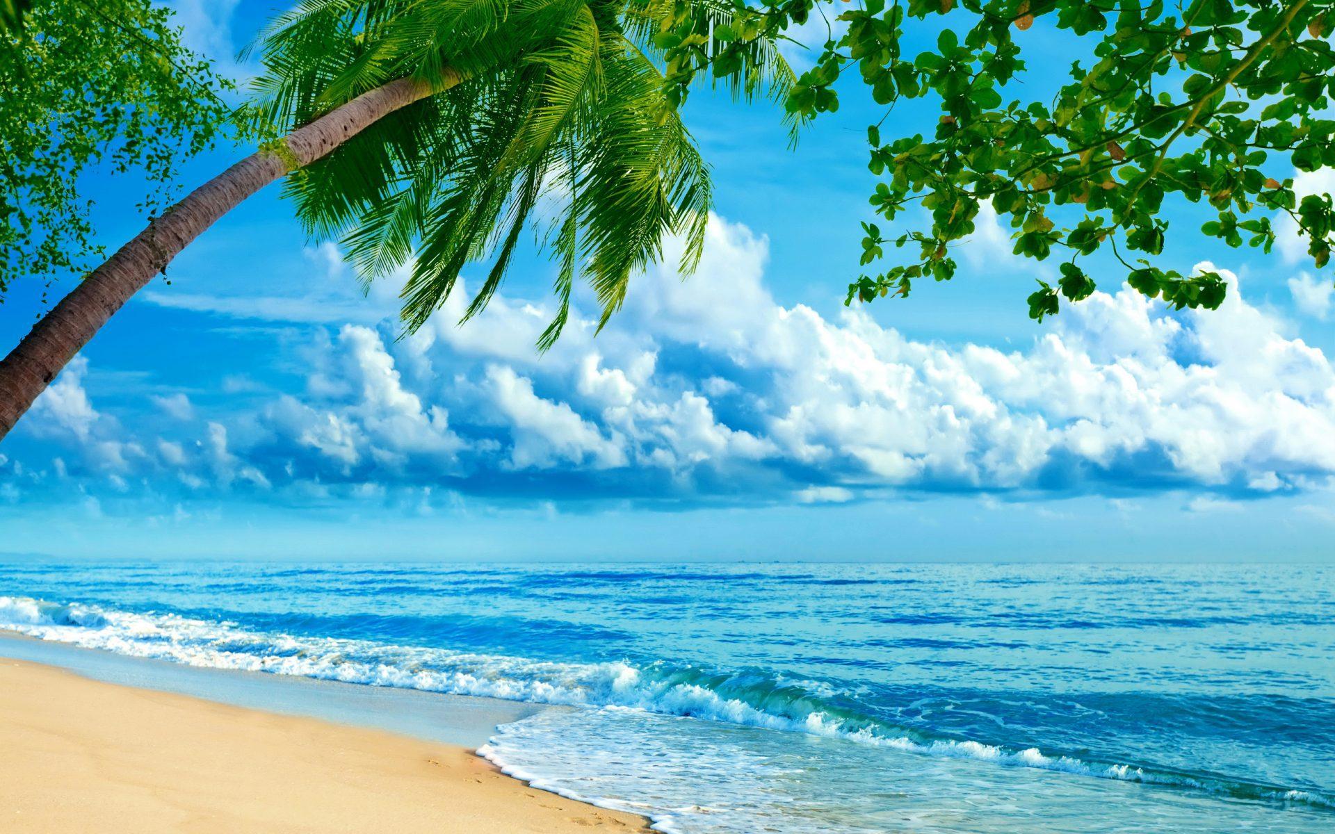 Море цветов фото картинки